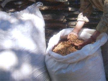 granulés de liège